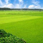 農地は取り扱いが難しい?不動産業界へ転職するなら知っておきたい農地に関する基礎知識